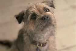 Wickes debuts dog brand character in TV and social push
