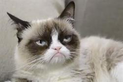 Campaign Viral Chart: Grumpy Cat makes his debut