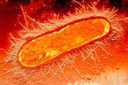 MHRA reminds prescribers about nitrofurantoin risks