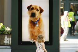 Battersea's digital dog 'follows' shoppers in outdoor campaign