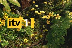ITV positive after 11% Q1 revenue boost to £500m