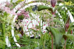 Inside the Breast Cancer Now garden for RHS Chelsea Flower Show