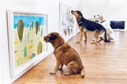 In pictures: More Than's exhibition for dogs