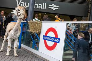 In pictures: TfL enlists furry friends for above-ground map launch