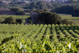 EDITOR'S BLOG: Wine wars - the French are revolting