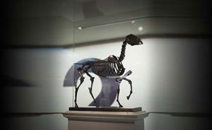 Fourth plinth digital exhibition allows shortlisted statues to 'live forever'