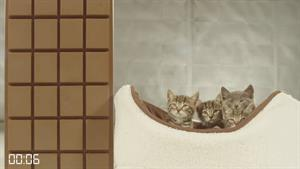 The quickest way to melt chocolate is not with kittens