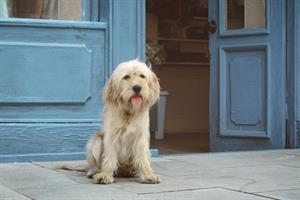 O2's dogs 'feel love' in kaleidoscopic new 4G ad