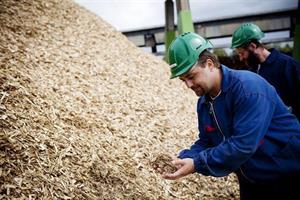IEA: Coal phase-outs to fuel European bioenergy growth