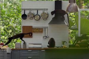 Ikea ad employs monkey business to sell kitchens