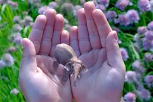 Google leads $542m funding for augmented reality start-up Magic Leap