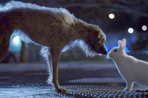 Stray dog finds street solidarity in Blue Cross TV ad