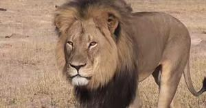 How 3 major airlines responded to Cecil the Lion's killing