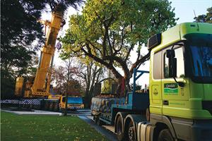 Tree lifting, moving  and planting