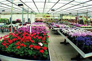 Top 30 Ranking of UK's biggest ornamental growers and plant suppliers