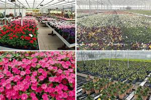 Top 30 Ornamentals Nurseries by Turnover - expansion and consolidation the name of the game
