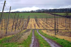 Crop protection body report sets out likely cost of glyphosate ban