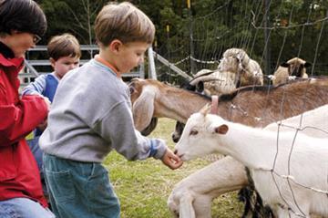 Public Health - Recognising zoonoses