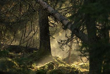 """Visit Sweden """"Sweden on Airbnb"""" by Forsman & Bodenfors"""