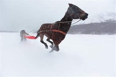"Canon ""skijoring"" by J Walter Thompson London"