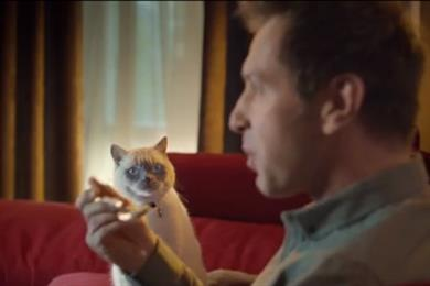 Quiet Storm turns to Rupert Everett-voiced feline for Young's TV push