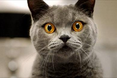 Encore launches pet food ad with surprised cats