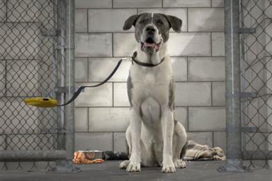 Pedigree launches 'virtual dog walk' charity drive