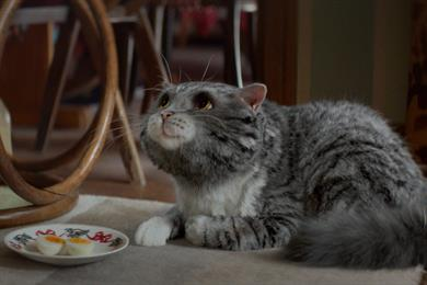 "Sainsbury's ""Mog's Christmas calamity"" by Abbott Mead Vickers BBDO"