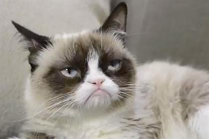 Grumpy Cat: stars in ad for Friskies