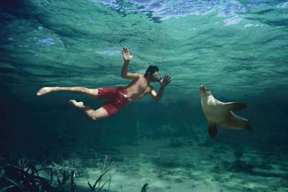Best Jobs: swimming with sea lions in South Australia