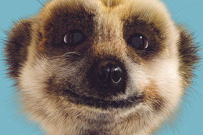 Alexsandr the Meerkat...voiced by Simon Greenall