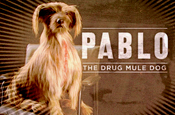 Frank 'pablo the dog' by Mother
