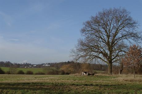 Report says NPPF is 'unnecessarily damaging the countryside'