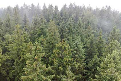 Around 4,000 sq km of forested areas could be used in Bavaria