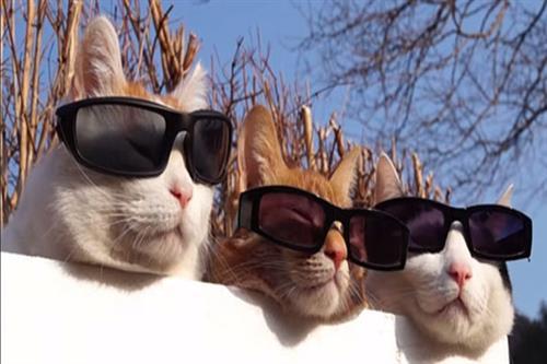 POWER PART TIME 50: Cool cats embrace flexibility