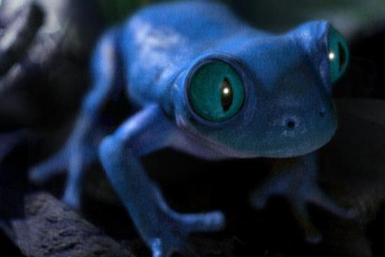 "AB InBev ""Bud Light frogs"" by Mcgarrybowen"