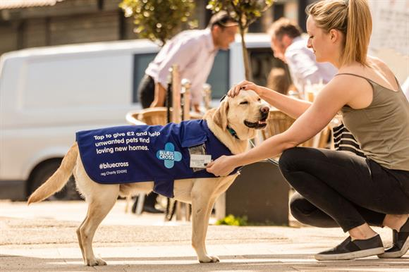 Pat the Blue Cross dog with your contactless card to make a donation