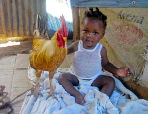 Five-month old Wibmy lives in a tent in Haiti. Photograph: Plan International/Benita Jean-Louis