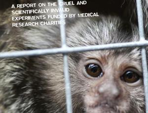 Animal Aid's report