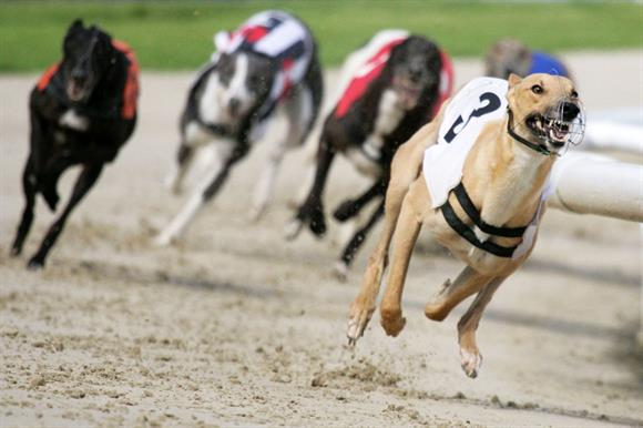 Greyhound racing: fundraiser cancelled