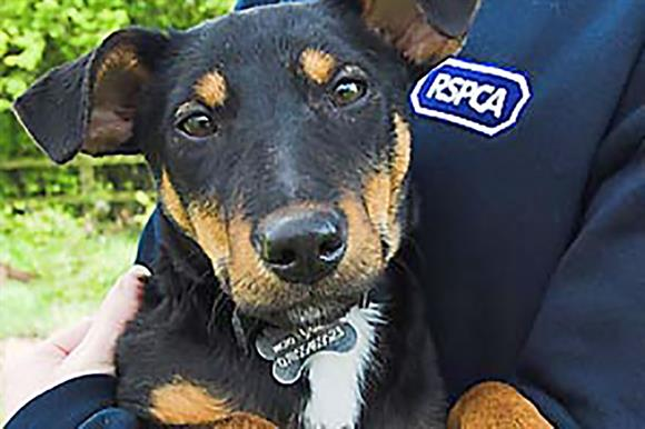 RSPCA: without chief executive since 2014