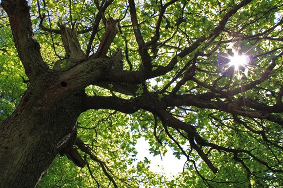 Woodland enterprises supported