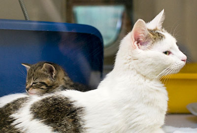 Cats Protection: charity partnership