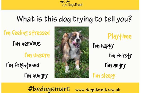 One of the social media images from the Be Dog Smart campaign