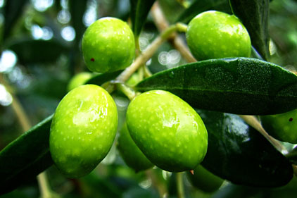 Spanish Olives: to be promoted to UK women
