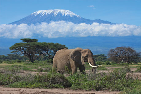 Kenya: Seeking to boost tourism with agency roster