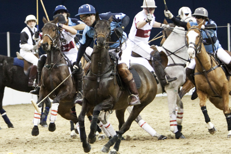 Horses: for polo, not lasagne