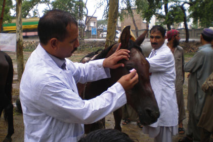 The Brooke: hopes to treat two million horses a year