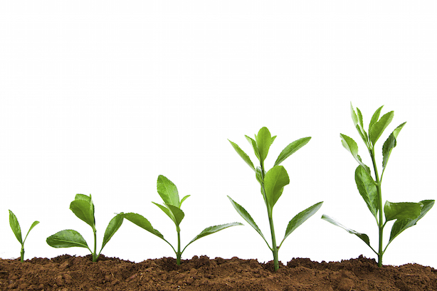 Organic growth is the strongest indicator your agency is doing well