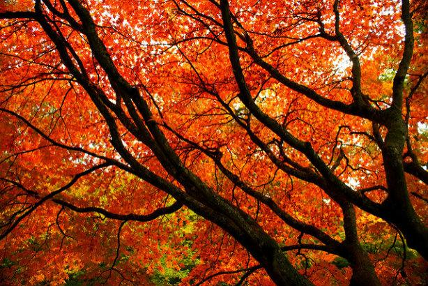 Forestry commission: Westonbirt, The National Arboretum (credit: Luke Andrew Scowen via Flickr)